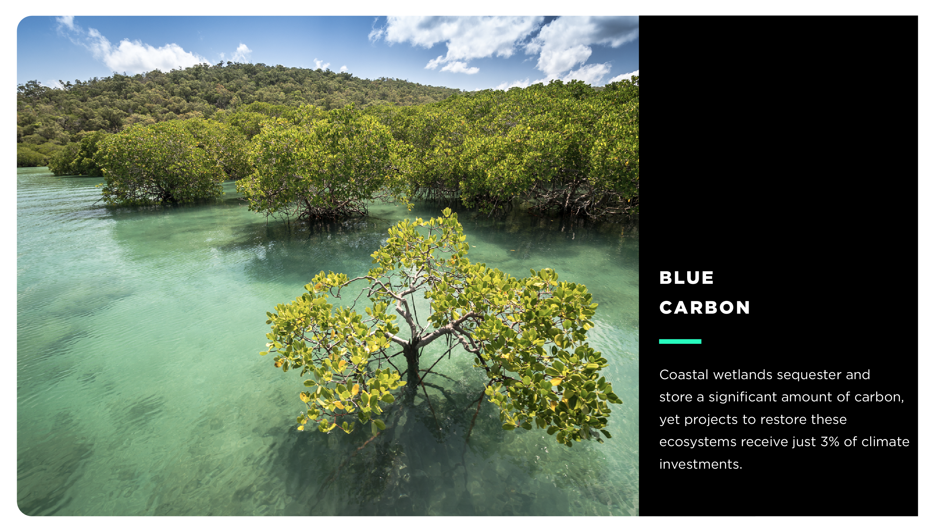 Coastal wetlands sequester and store a significant amount of carbon, yet projects to restore these ecosystems receive just 3% of climate investments.